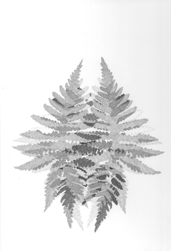 Fougère 3, de l'artiste Émilie Bernard , Graphite sur papier Arches, Création unique, dimension 10 x 7 pouces de largeur