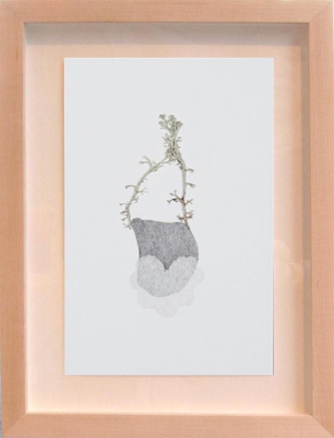 Herbier # 1 (d.encadré), de l'artiste Émilie Bernard, Dessin, graphite, Création unique, dimension 9 x 6 pouces de largeur