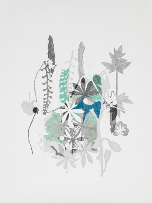 Herbier # 4, no 1/2, de l'artiste Émilie Bernard, Dessin, graphite et crayon de couleur, Création unique, dimension 24 x 18 pouces de largeur