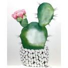 Affiche, Cactus fleuri, de l'artiste Katrinn Pelletier, dimension : 10 x 8 po de largeur