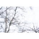 Dans les bras du vent, St-Joachim, 1/25, de l'artiste Manon Dumas, Photographie, impression numérique, sur papier coton, 100% Photo RAG, dimension : 11 x 14 po de largeur