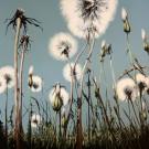Jardins sauvages IX, de l'artiste Elyse Turbide, Acrylique sur toile, Dimension : 48 po x 48 po de largeur