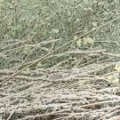Jardins sauvages X, de l'artiste Elyse Turbide, Acrylique sur toile, Dimension : 48 po x 48 po de largeur