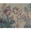 Romane, de l'artiste Brigitte Thériault, Photographie sur plexi mat, dimension : 20 x 24 po de largeur