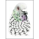 Affiche, Oiseau pigeon, de l'artiste Katrinn Pelletier, dimension : 10 x 8 po de largeur