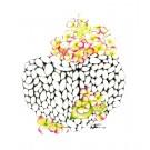 Affiche, Coeur de laine et hydrangée, de l'artiste Katrinn Pelletier, dimension : 10 x 8 po de largeur