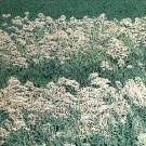 Jardins sauvages XXXIII (t.encadré), de l'artiste Elyse Turbide, Acrylique sur toile, Dimension : 40 po x 40 po de largeur